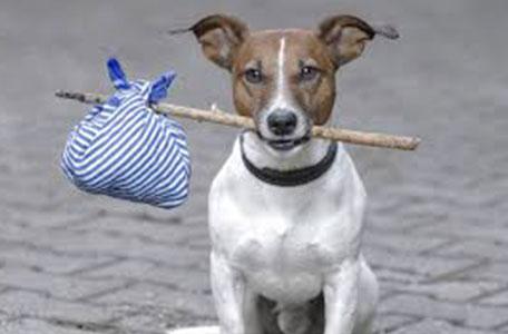 Thám tử tư tìm Thú Cưng dịch vụ truy tìm thú cưng chuyên nghiệp